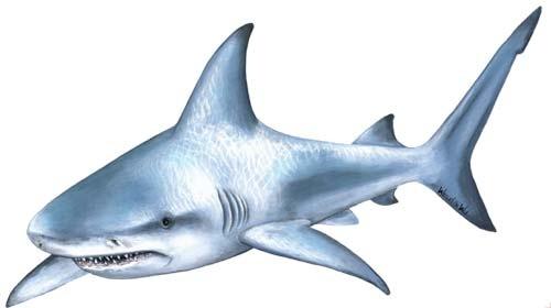 Вот нашел оригинал акулы - я ее просто уменьшил и подергал немного за...