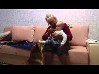 Леша кушает,а Торрик смотрит.Бабушкино лукошко.
