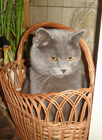 Пропал кот Москва - pikabu ru