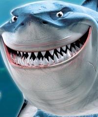Где имеются акулы, следует избегать ярко-желтых плавок.