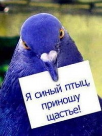 Александр Комиссаров, 31 августа 1990, Москва, id123204212