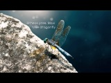 illitheas pres. Mavi - blue dragonfly (Original mix)