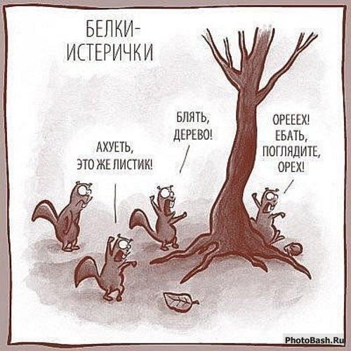 Рыжие друзья :-)