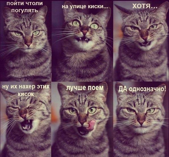 Коты воители длинные малые - be4e