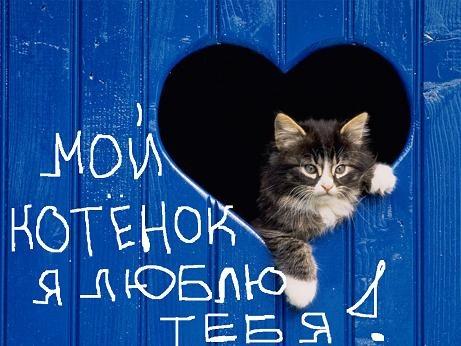 Картинка с надписью люблю тебя котенок мой, рапунцель