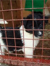 Приют для собак Химки-2 (он же super-sobaka.ru)  0141f8ead75f4
