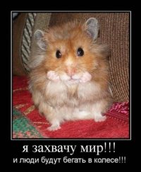 Никита Белов, 24 августа 1987, Санкт-Петербург, id61438600