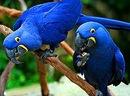 ...жако, какаду ара, амазоны, александрийские, продам попугаев москва.