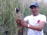 Змееголов. Snakehead