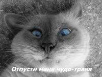 Андрей Смирнов, 2 мая 1987, Санкт-Петербург, id68396053