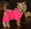 Клиенты нашего магазина для маленьких собак