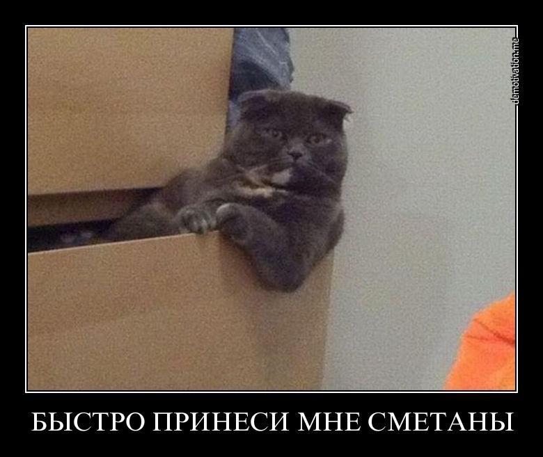 Фото дзюдо владимир макеев пенза уже начинает