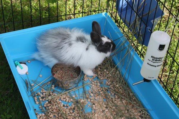 Заяц на дачу 3