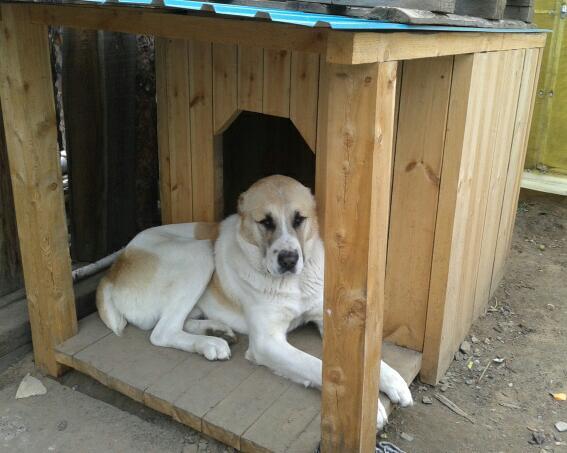 Будка для собаки хаски