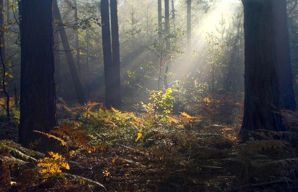 Осенние этюды