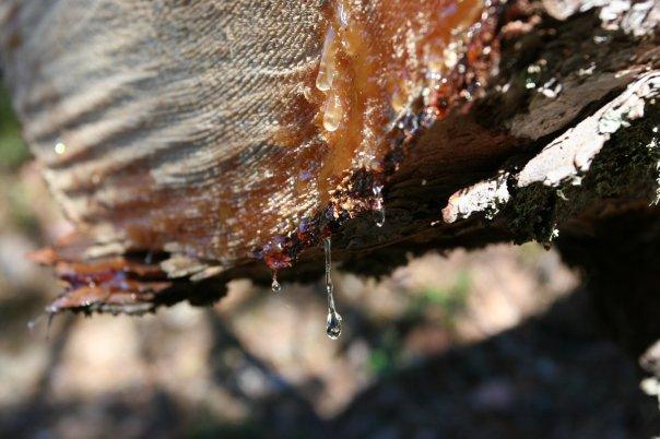 Отдых на природе (рыбалка, охота, грибы, пикники и пр.) X_0c783329