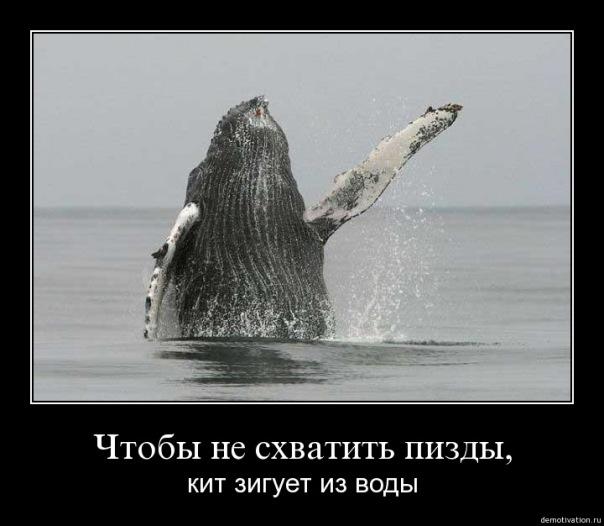 http://cs9431.vkontakte.ru/u3679287/6600088/x_b3c8f7e5.jpg