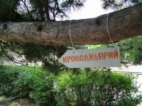 Кроко Зеленый, Волгоград, id112591258
