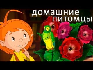 Развивающие мультфильмы Совы - Мои Домашние Питомцы - Новые Друзья