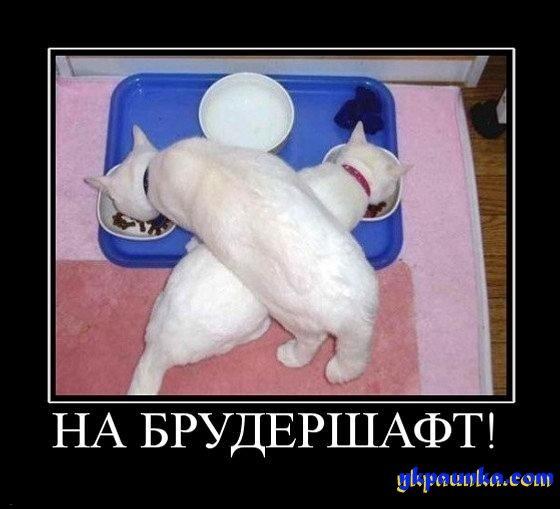 http://cs9443.vk.me/u139247266/146328156/x_8db8d548.jpg