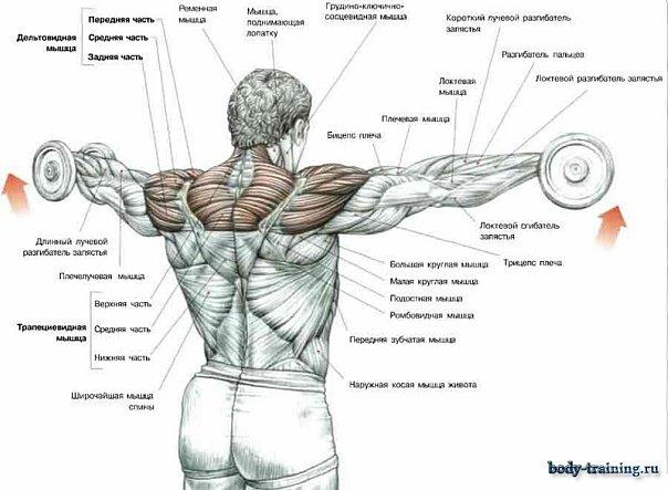 какие можно делать упражнения чтобы убрать живот