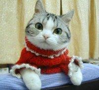 Funny Cat, 26 марта , Москва, id47772685