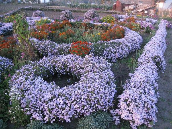 Розсада садових рослинок. _s_hb5UpxCU