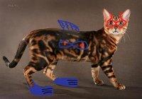 Внешне бенгальская кошка производит впечатление дикого зверя.