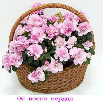 Азалия Гайфуллина, 10 октября , Казань, id189813685