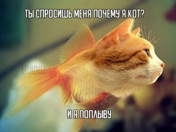 http://cs9459.vk.me/v9459952/3b16/ONCqBww0c4w.jpg