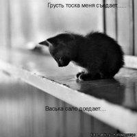 Вася Кот, 17 апреля , Домодедово, id42015321
