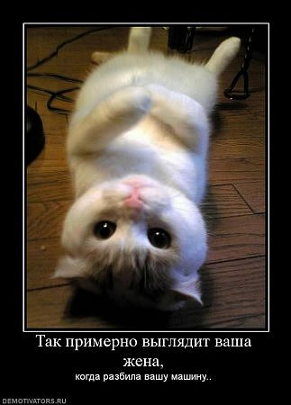 ЛЮБИТЕ КОТИКОВ?)))))