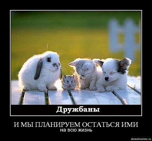 http://cs9491.vkontakte.ru/u56810494/114473754/x_dbb2242f.jpg