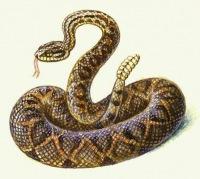 Venomous Snake, 22 июня 1999, Санкт-Петербург, id152070824