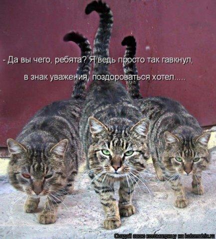 http://cs9507.vkontakte.ru/u28094468/93327573/x_23ed1391.jpg