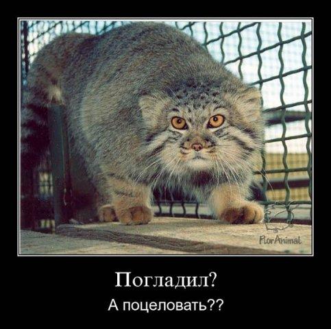 http://cs9508.vkontakte.ru/u28094468/104209628/x_f7edf9fe.jpg