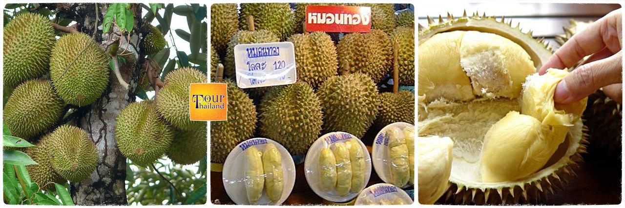 Дуриан (Durian)