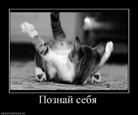 http://cs9515.vkontakte.ru/u13933596/107998061/x_3c70ee36.jpg