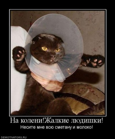 http://cs9515.vkontakte.ru/u13933596/107998061/x_47f0b19e.jpg