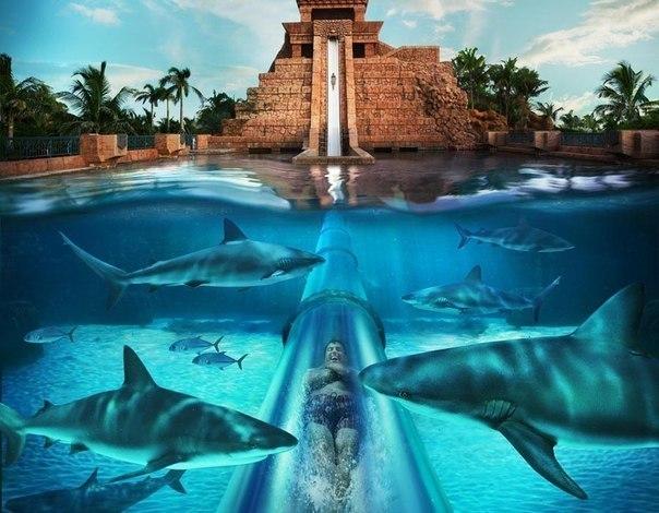 Aquaventure — самый дорогой аквапарк (остров Парадайз, Багамы)