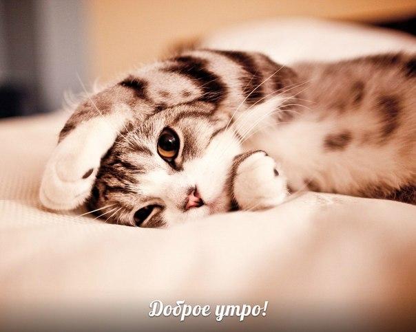 Картинки по запросу доброе утро кошка