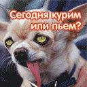 Лена Дягель, 15 апреля 1991, Краснодар, id74950591