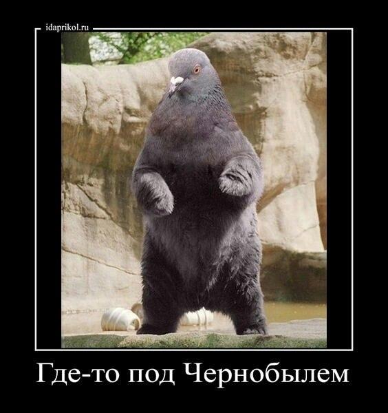 Секс руски видйо дефчонки 9 фотография