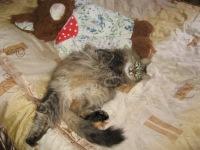 Ysa Moe, 11 августа , Санкт-Петербург, id102392812