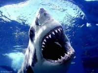 Shark Poker, Красноярск, id117307154