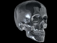 Skull Череп, 7 мая , Киев, id112258016