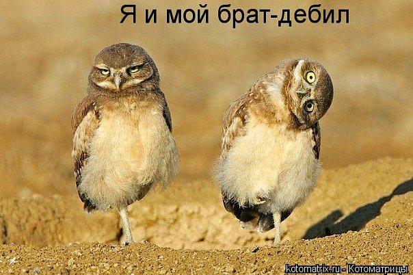 http://cs9569.vkontakte.ru/u43692401/101261245/x_b69ab5ed.jpg
