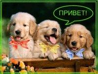 Сергей Петров, 19 апреля 1990, Гродно, id90683036