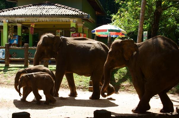 Шри-Ланка... я туда больше не хочу! (начало)