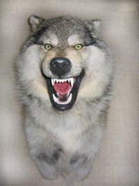 """Медальон  """"Волк """" Волк - символ преданности семье, ума и силы, а также справедливости и честолюбия.  МВ-1."""